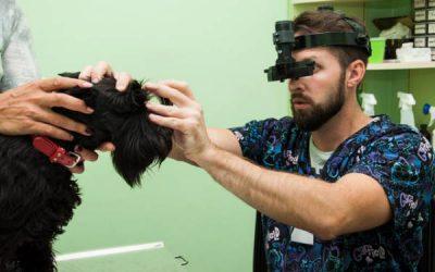 Офтальмологічне обстеження